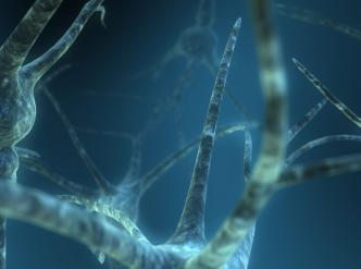 Artistic impression of a network of neurons. The branched extensions, known as dendrites, transmit impulses to the cell body.