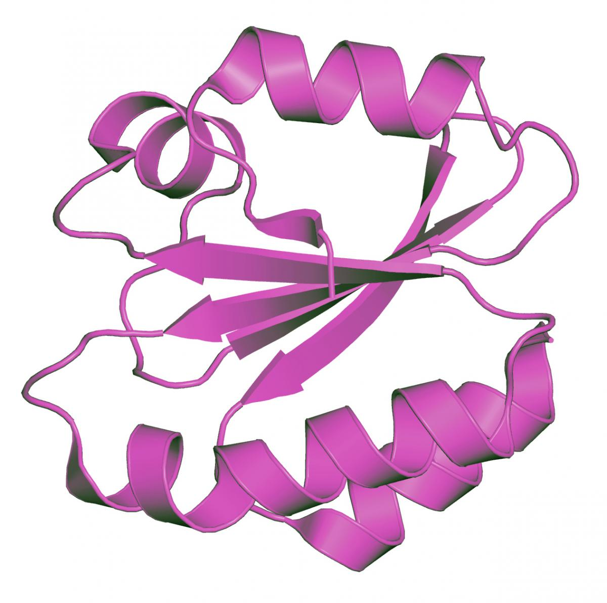 Molecular structure of thioredoxin