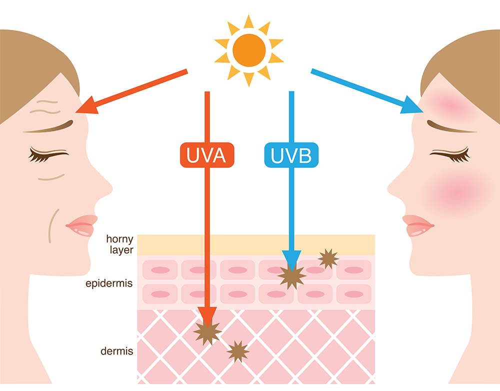 UVA rays penetrate deep into the skin's thickest layer the dermis) resulting in skin ageing, while UVB rays damage the upper layers of the skin (the epidermis) causing sunburn.