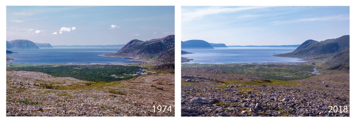 Figure 2: Gulgo, one of the world's northernmost birch forests. Climate warming means the distant hillsides are greener today than in 1974, but the foreground forest shows moth damage
