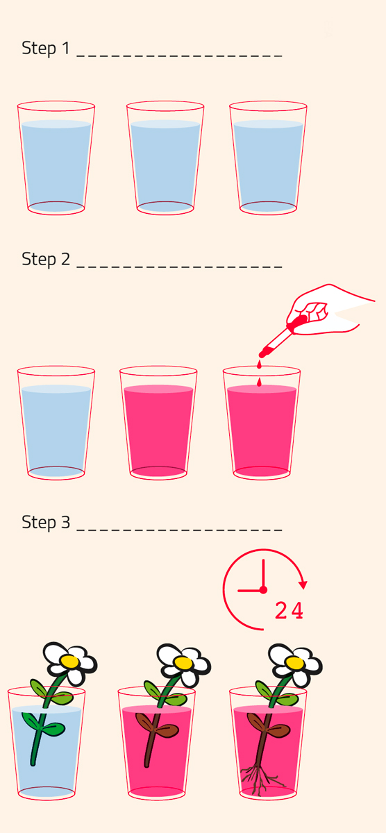 Procedure for activity 3, which looks at how water is transported in plants