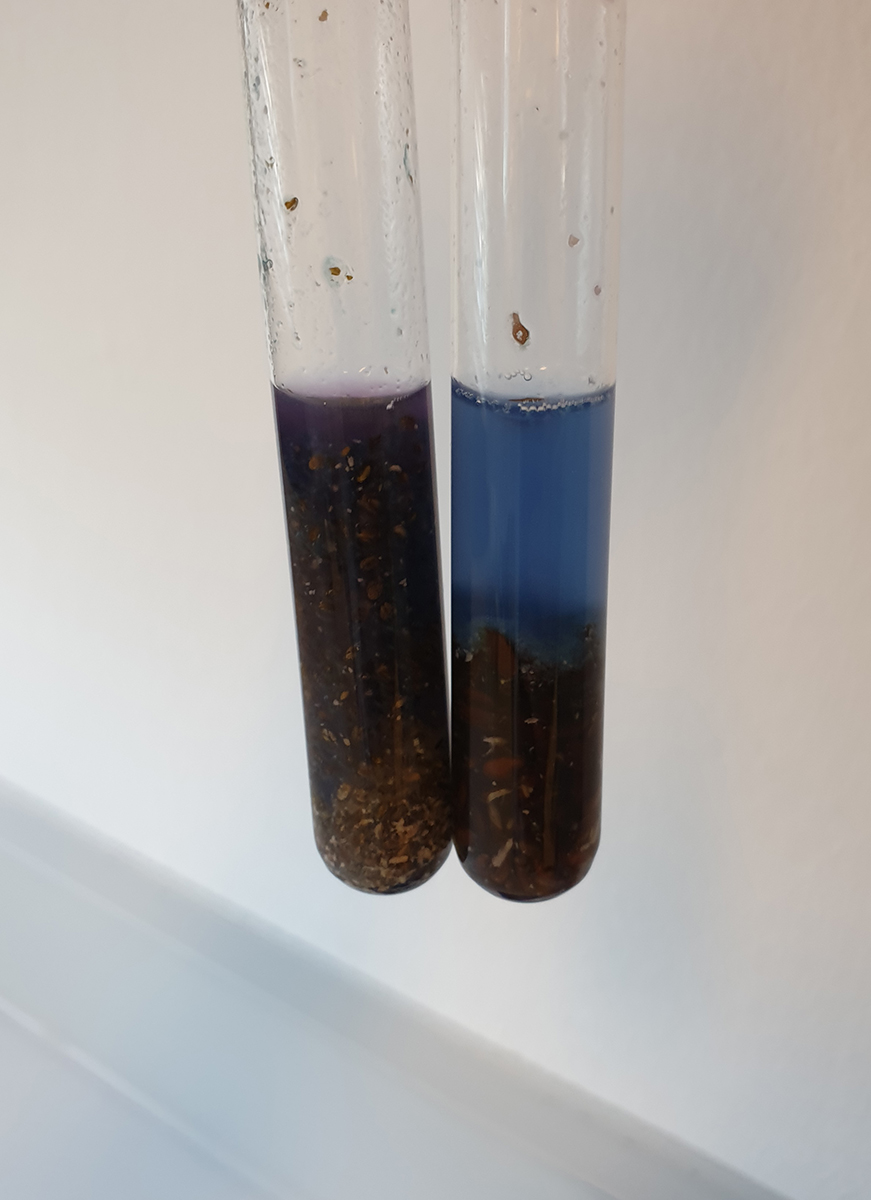 Colour change after adding copper(II) sulfate solution to chia seeds (left) and linseeds (right)