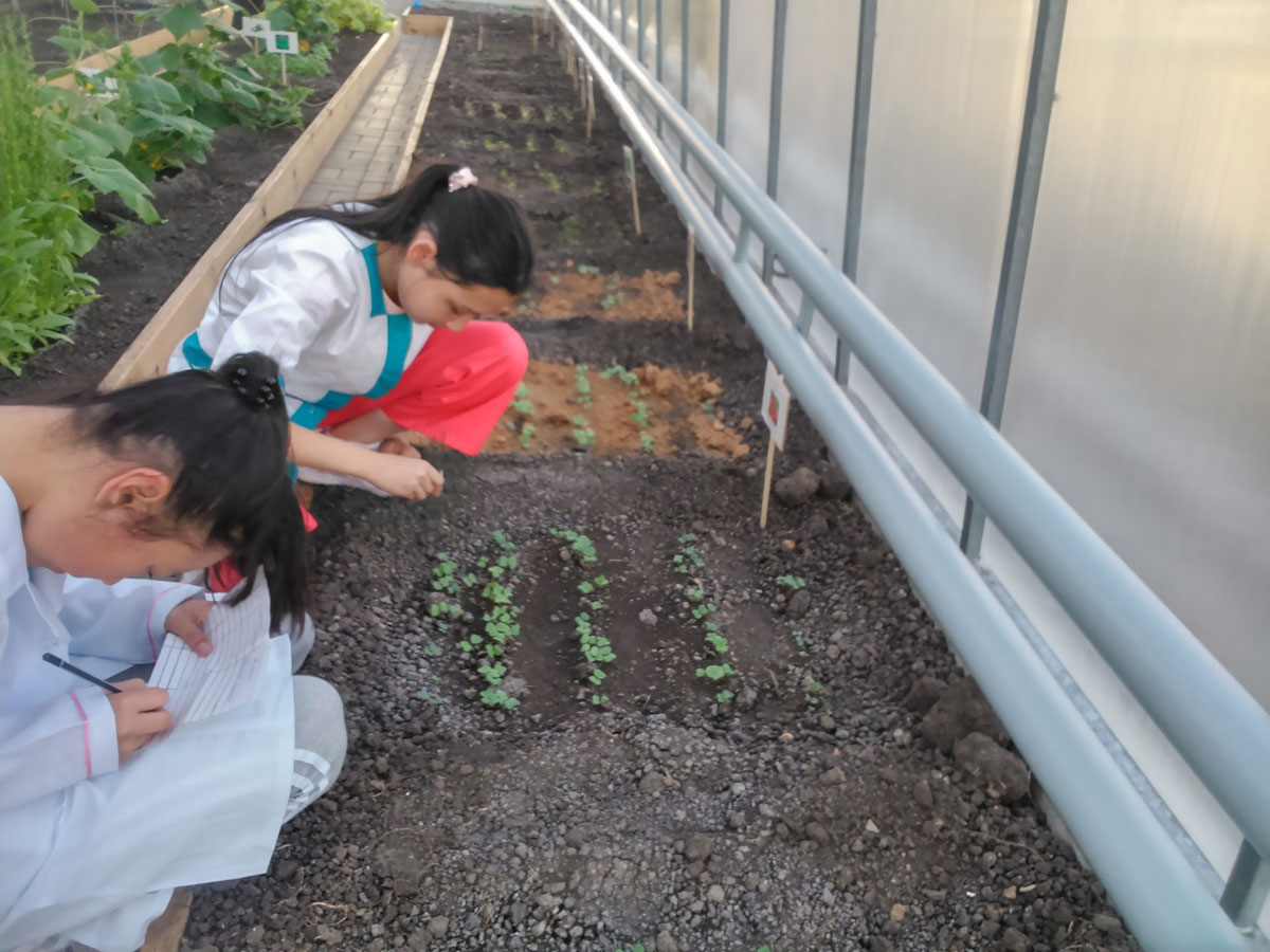 Students recording radish data from the different soil plots