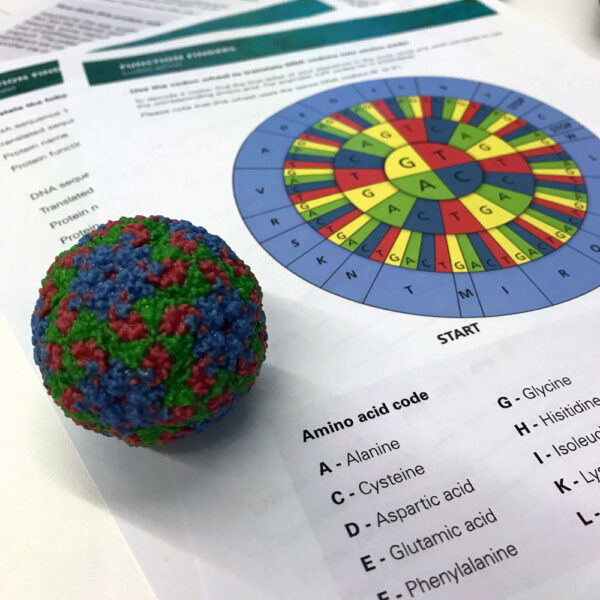 3D model of Rhinovirus placed on top of a Function finder worksheet.